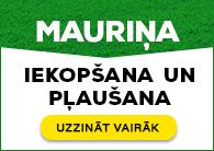 Mauriņa pļaušana un iekopšana